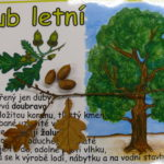 projekt-stromy-25-10-2016-051