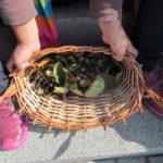 ŠD První úlovky pro podzimní tvoření - 8.9. 2017 004