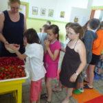 ZŠ Sklízíme plody školní zahrady - 30.5. 2018 006